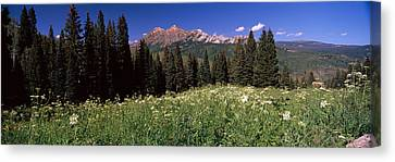 Forest, Kebler Pass, Crested Butte Canvas Print by Panoramic Images