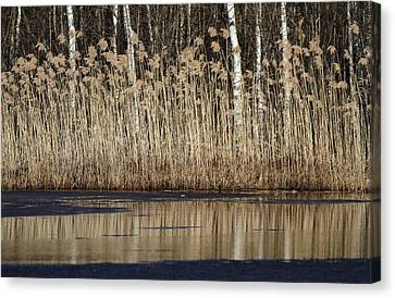 Canvas Print - Forest Lake In Early Spring by Alex Sukonkin