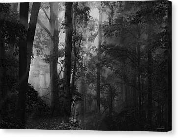 Forest Light Canvas Print by Ron Jones