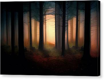 Forest Light Canvas Print by Shanina Conway
