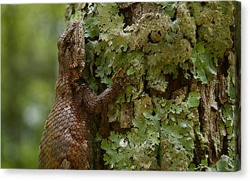 Forest Lizard 2 Canvas Print
