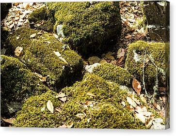 Forest Moss Canvas Print by Suzanne Luft