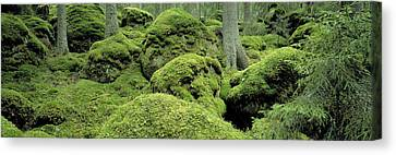Forest Moss Sweden Canvas Print by Panoramic Images