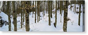 Forest Near Lake Bled, Upper Carniola Canvas Print by Panoramic Images