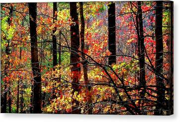 Color The Forest Canvas Print