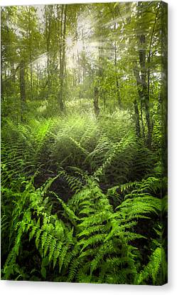 Forest Of Light Canvas Print by Debra and Dave Vanderlaan