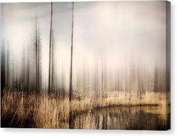 Forest Of Maine Canvas Print