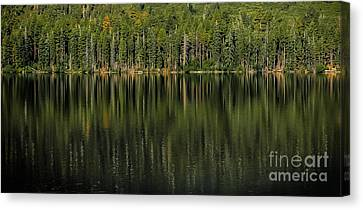 Forest Of Reflection Canvas Print by Mitch Shindelbower