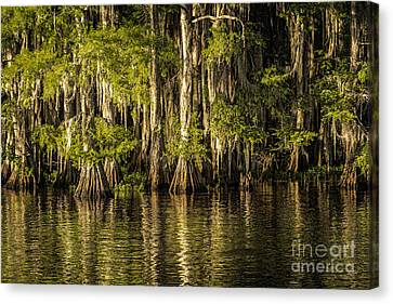 Forest On Caddo Lake Canvas Print