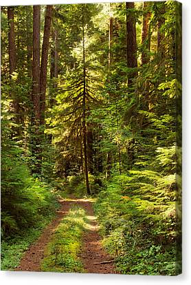 Forest Path 5 Canvas Print by Leland D Howard