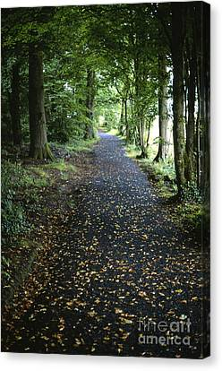 Forest Path Canvas Print by Chris Selby