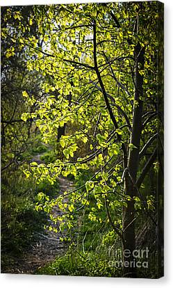 Forest Path Canvas Print by Elena Elisseeva