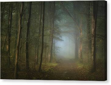 Forest Pathway Canvas Print