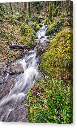 Forest Rapids Canvas Print by Adrian Evans