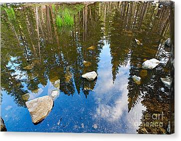 Forest Reflection Canvas Print by Jamie Pham