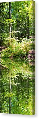 Canvas Print featuring the photograph Forest Reflections by John Stuart Webbstock