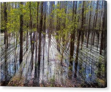 Forest Reflections Canvas Print by Mountain Dreams