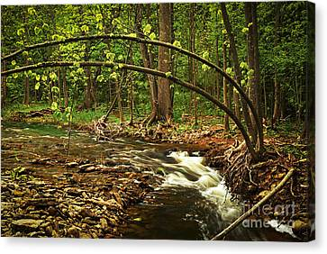 Forest River Canvas Print by Elena Elisseeva