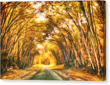 Forest Road Canvas Print by Joel Olives