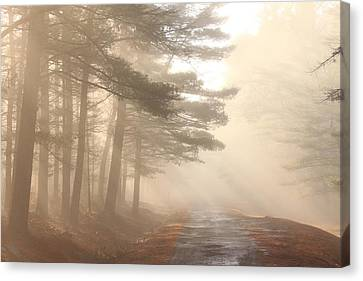 Forest Road Morning Fog Canvas Print by John Burk
