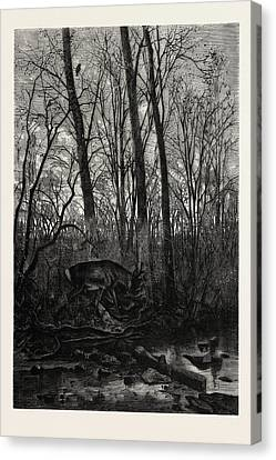 Forest Scene In Spring Canvas Print by English School