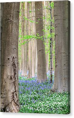 Forest Spring Flowers  Canvas Print by Dirk Ercken