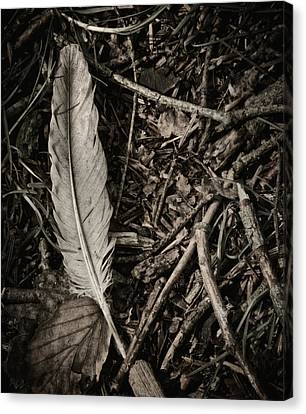 Forest Floor Canvas Print - Forest Still Life by Odd Jeppesen