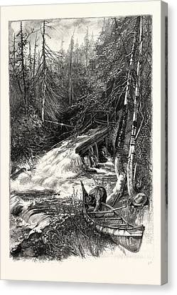 Slide Canvas Print - Forest Stream, And Timber Slide, Canada by Canadian School