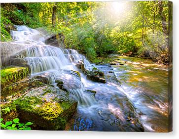 Forest Stream And Waterfall Canvas Print