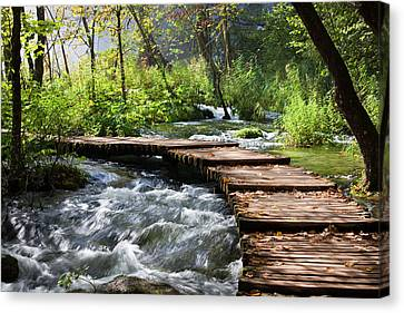 Forest Stream Scenery Canvas Print