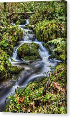 Forest Stream V2 Canvas Print by Ian Mitchell