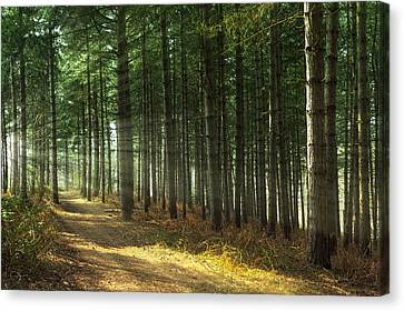 Forest Sun Rays Canvas Print by Svetlana Sewell