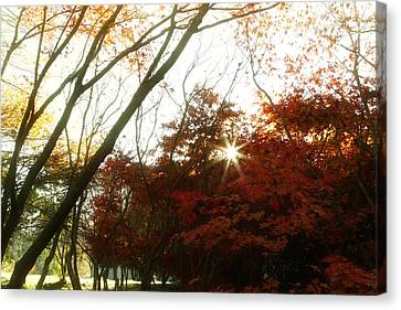 Forest Sunlight Canvas Print by Les Cunliffe