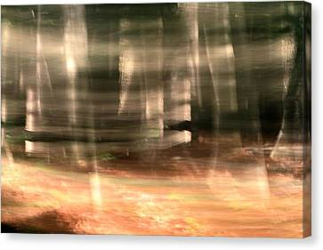 Forest Sunrise Canvas Print by Dan Sproul