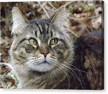 Canvas Print featuring the photograph Forest The Cat by Gerald Strine