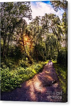 Forest Track Canvas Print by Daniel Heine