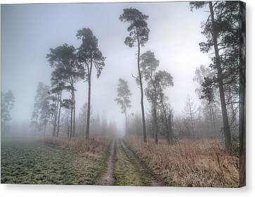 Abandoned Canvas Print - Forest Track In Mist by EXparte SE