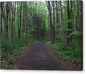 Forest Trail Canvas Print by Catherine Gagne