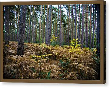 Canvas Print featuring the photograph Forest Trees by Maj Seda
