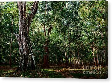 Forest View At Siem Reap Canvas Print by Julian Cook