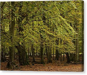 Canvas Print featuring the photograph Forest Visitor by Inge Riis McDonald