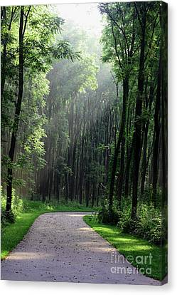 Canvas Print featuring the photograph Forest Walk by Anita Oakley