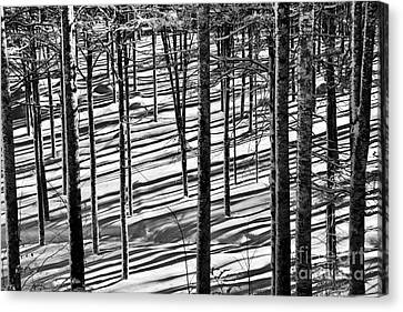 Forest's Shadows Canvas Print