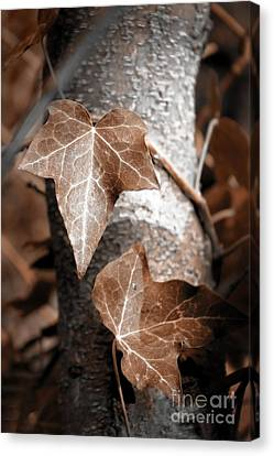 Canvas Print featuring the photograph Forever Entwined by Ellen Cotton