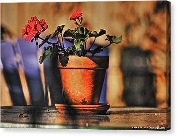 Canvas Print featuring the photograph Forever Flower by Kandy Hurley