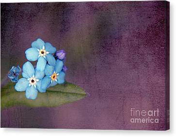 Forget Me Not 02 - S0304bt02b Canvas Print by Variance Collections