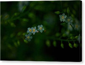 Forget  Me Not 4 Canvas Print