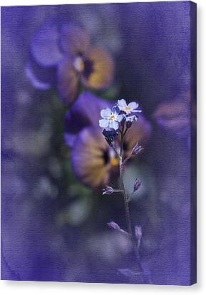 Forget Me Not Canvas Print by Richard Cummings