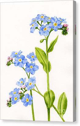 Forget-me-nots On White Canvas Print by Sharon Freeman