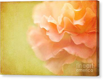 Forgiveness Canvas Print by Beve Brown-Clark Photography